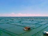 上海商务礼品/员工福利就在蟹状元