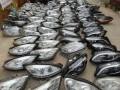 上海闵行区汽车配件回收疝气大灯回收增压器回收