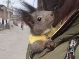 各种可爱的松鼠等你带回家