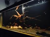 北京朝阳鱼缸维护 鱼缸订制设计 造景规划