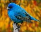 赏鸟租赁 鸵鸟出租 鸟类租赁 百鸟园展/百鸟园
