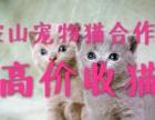 高价收购宠物猫 幼猫成猫长期批发零售实体店欢迎来电