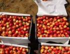 庆升果品产销合作社代收123、香果、沙果、苹果梨