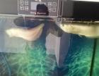 银龙鱼加鱼缸