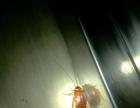 灭蟑螂,灭老鼠,四害防治杀虫干净,证件齐全正规灭虫