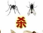 专业灭鼠、灭白蚁、灭跳蚤、专业家庭灭鼠、灭白蚁