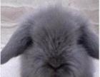 大量批发仓鼠兔子金丝熊。
