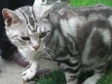 低价转让宠物小猫(2月)