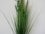 6头小塑料叶洋葱草
