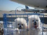广东哪里有宠物托运