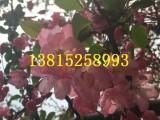 苏州别墅景观设计 苏州庭院施工 苏州景观绿化工程公司