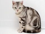 河源加菲猫猫舍地址 加菲猫电话