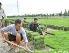 海南绿化优质草皮