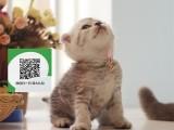 昆明哪里卖折耳猫 昆明哪里有宠物店 昆明哪里卖宠物猫便宜