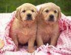 狗场直销各类世界名犬 健康质保 送货上门