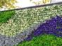 西安植物墙绿植墙活动装饰专业设计