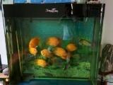 低价鱼缸转让。。