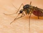 正规灭鼠公司灭蟑螂杀蚊虫灭白蚁灭跳蚤臭虫