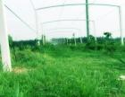 木美农业土地合作租赁,300亩园区全国招商合作