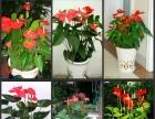 广州租摆绿植,绿植花卉租摆室内净化空气绿植园林绿化