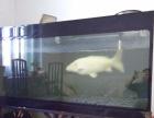 大锦鲤出让大鱼缸