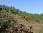 8549亩林地、坡地、荒地出售或出租