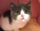 千之宠猫舍专业繁殖,优质宠物猫,保证健康,售后保障