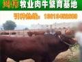 福建适合引种什么品种的肉牛养殖好?养牛有养牛补贴吗
