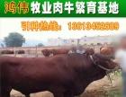 山西牛厂 夏洛莱牛养殖 山西牛厂产品信息