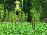 农业生态园杀虫灯-太阳能杀虫灯-灭虫灯-
