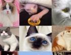 宠物猫活体幼猫布偶猫精灵无毛猫加菲美短英短蓝猫豹猫