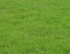 北京朝阳草坪出售种植公司多种风格组合 满足您的个性需求