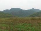 清远市阳山县400亩优质旱地