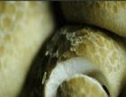 大量供应珍珠番石榴、木耳等产品
