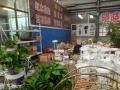 [好租铺推选]豪德罗兰花卉市场商铺招租