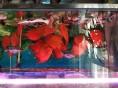 15条元宝鹦鹉.2只忍者龟.一条招财猫.3条罗汉