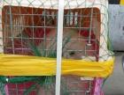 长沙飞跃宠物托运宠物空运铁运快速专业办理提供上门接送