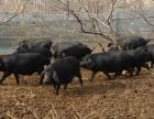 武汉黄陂 800亩 休闲式农庄 生态养殖火热招商合作共赢