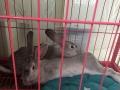2只成年兔兔+4大袋全新兔粮+8成新大兔笼!