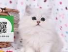 杭州哪里有宠物猫出售,杭州哪里有卖纯种金吉拉价格