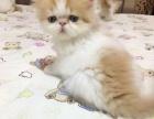 加菲猫,加菲红樊萌宝宝