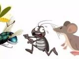 广州正规除四害公司,灭蟑螂要抹缝,灭老鼠要堵洞