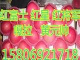 安义县红富士苹果价格        10