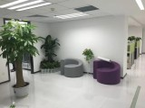 广州珠江新城附近办公室植物租摆,办公室绿植租摆