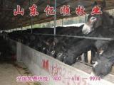 山东大型养驴基地           山东肉牛养殖场