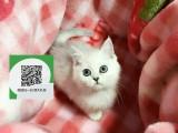 南通哪里有宠物猫出售,南通哪里有卖纯种蓝猫价格