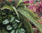 成都园林绿化,立体植物景观 绿植墙,私家花园,花草栽种
