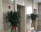 公司租花 办公室绿植盆景花卉租赁养护酒店写字楼绿化
