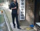 重庆屠宰场羊肉在哪地方