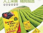 百豆通厂家直招教你月收过万的方法